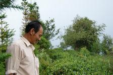 Zhai guo ting dans un jardin de Yong De, Lincang