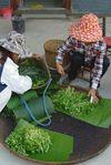 Retour de cueillettes de plantes fraîches dans la foret chez les Jinuo