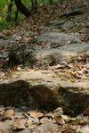 Fragment de la route du thé à Yi Wu
