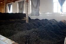 Fermentation du puerh <span class='translation'>(Pu Er tea)</span> (Wo Due) dans le Yunnan, Kucong Cha Chang, Pu'Er