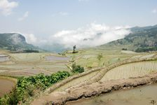 Famous rice fields south of Hong He Ailao Shan
