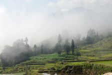 Ailao Shan in the Mist