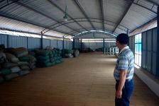 Stock de maocha à l'usine Kucong Shan Zhai