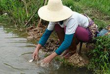 Lavage du Guo Pi à la rivière