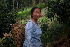 Madame Lee dans les jardins à thé de la famille