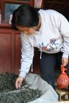Xiao Lee observant un maocha à Mahei zhai