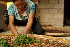 Madame Lee travaillant les feuilles de thé