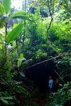 Soudain le sentier plonge au coeur de la forêt