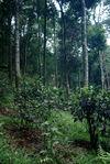 Jardin ancien au oeur de la forêt