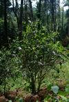 Jardin ancien au coeur de la forêt