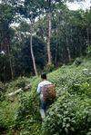 Vers les nouvelles plantations