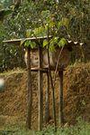 Ruche dans le jardin à thé des Wang