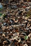 Ground covered with fallen leaves