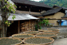 Tea leaves drying Luo Shui Dong