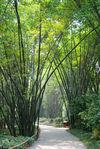 Parc Wang Jiang Lou