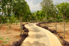 Driveway future garden bordering the factory Chen Sheng