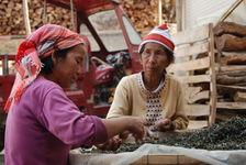 Ferme dans le Xishuangbanna (Jinuo Shan)