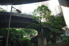 Hong Kong, the city that grows in the forest
