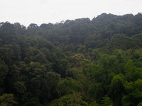 Forest around Gaoshan