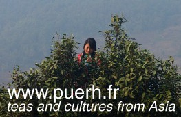 Puerh tea information website